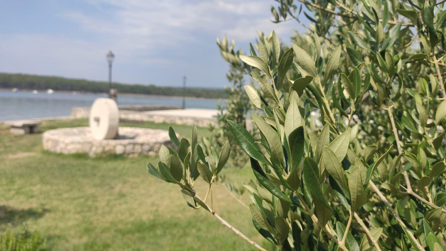 Privatni izlet: Otok Krk